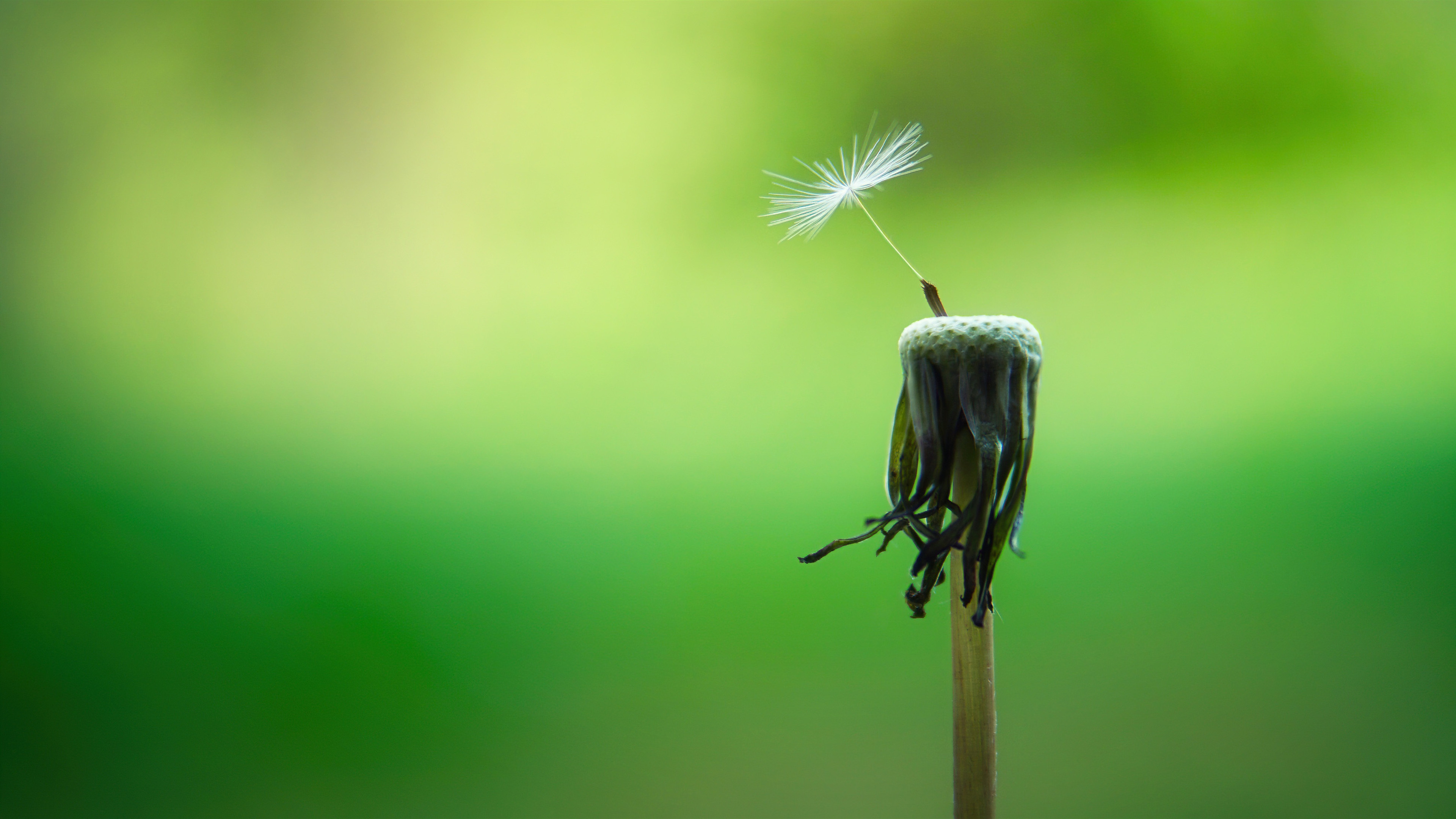 春潮春去,花开花落,只有您依然如旧。-觅爱图