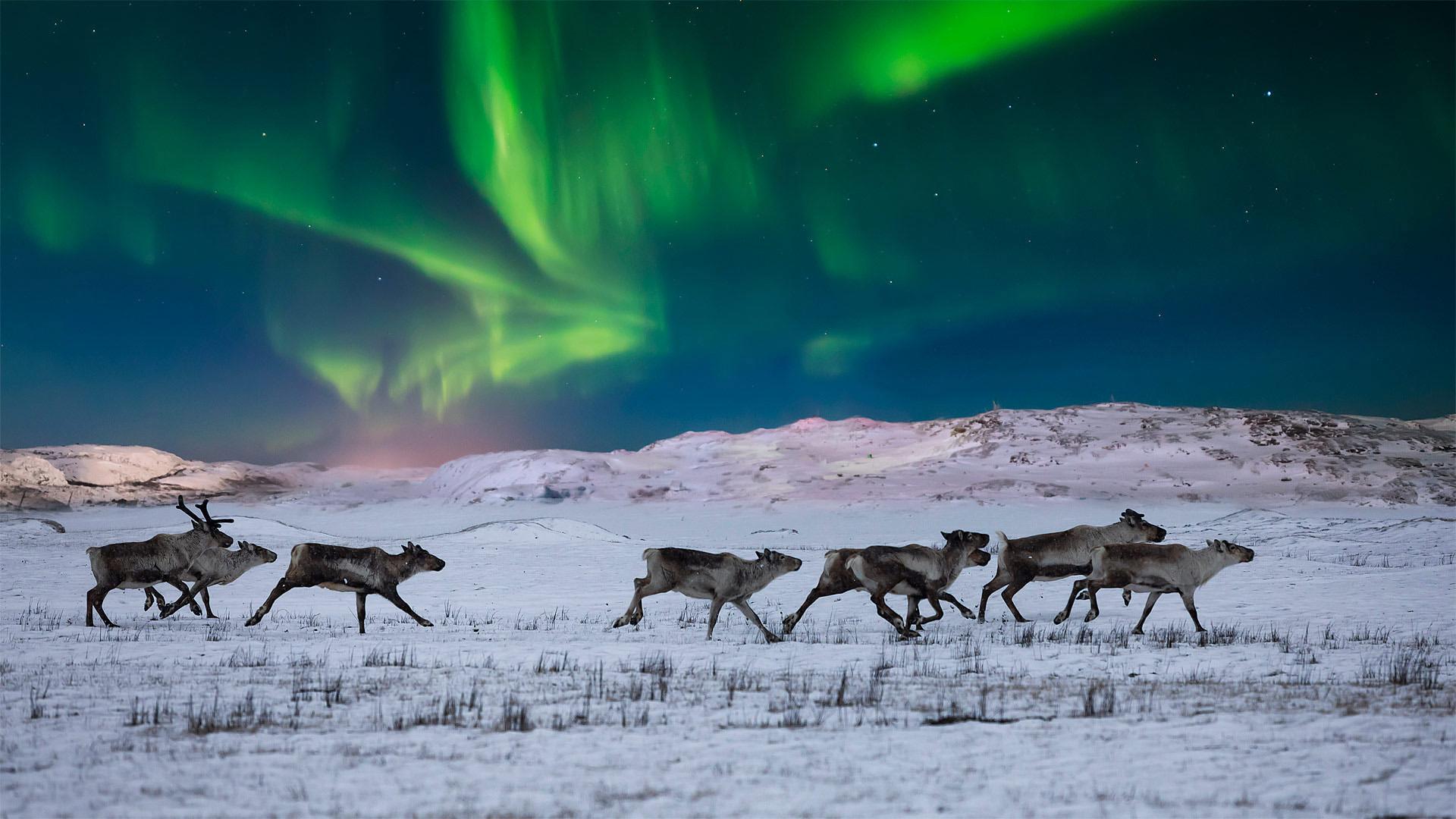 风景大片,奇幻梦境,麋鹿,雪地,北极