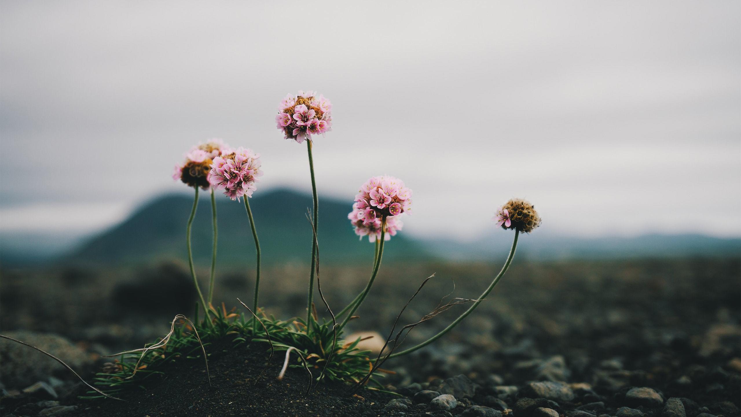 小清新,清新淡雅,鲜花,绣球,特写,野花