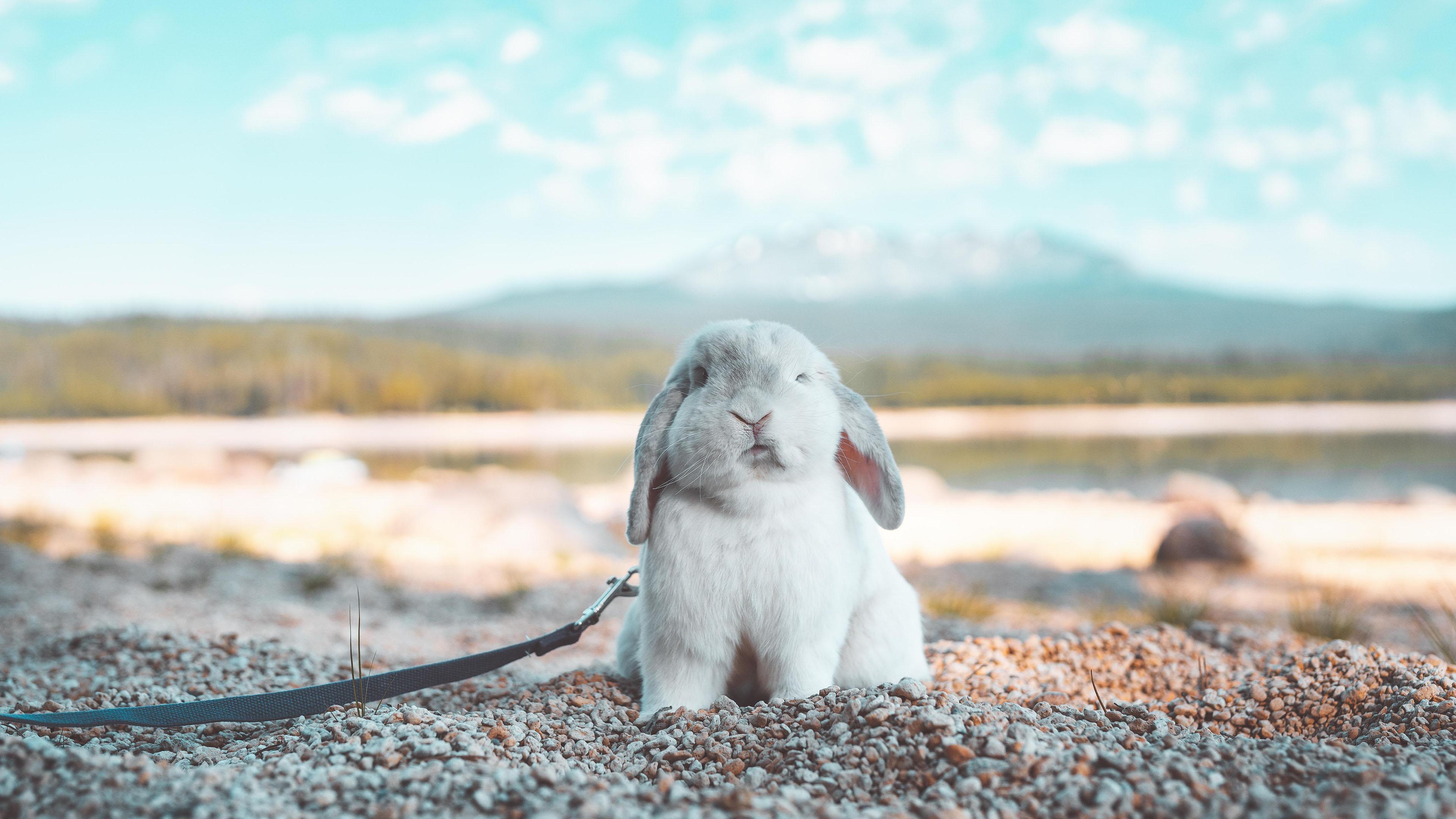 萌宠动物,古灵精怪,兔子,沙滩,可爱,兔兔