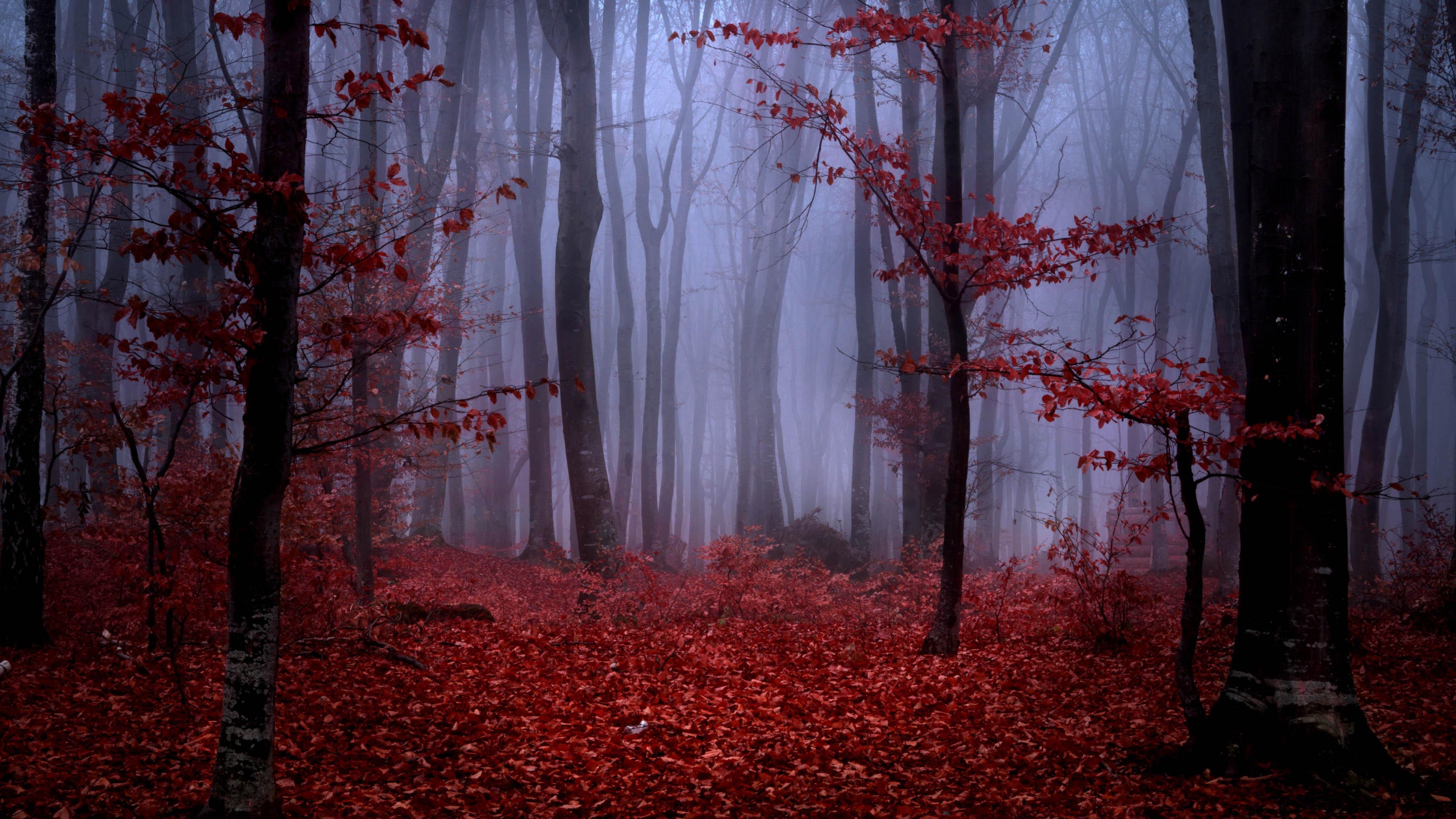 风景大片,秋意正浓,红叶,枫树,树林,森林