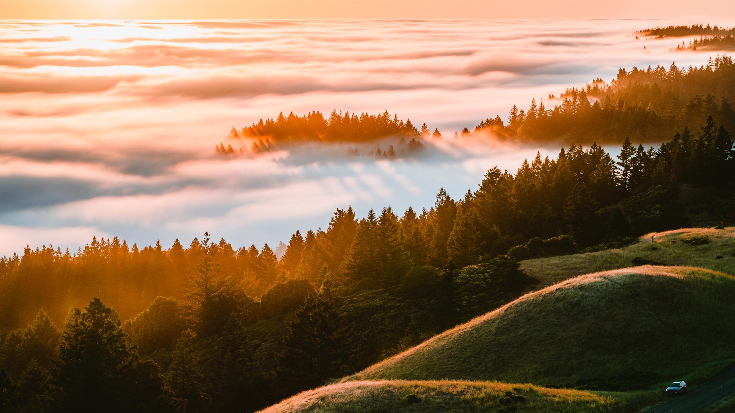 风景大片,秋意正浓,树林,云海,日出,山坡