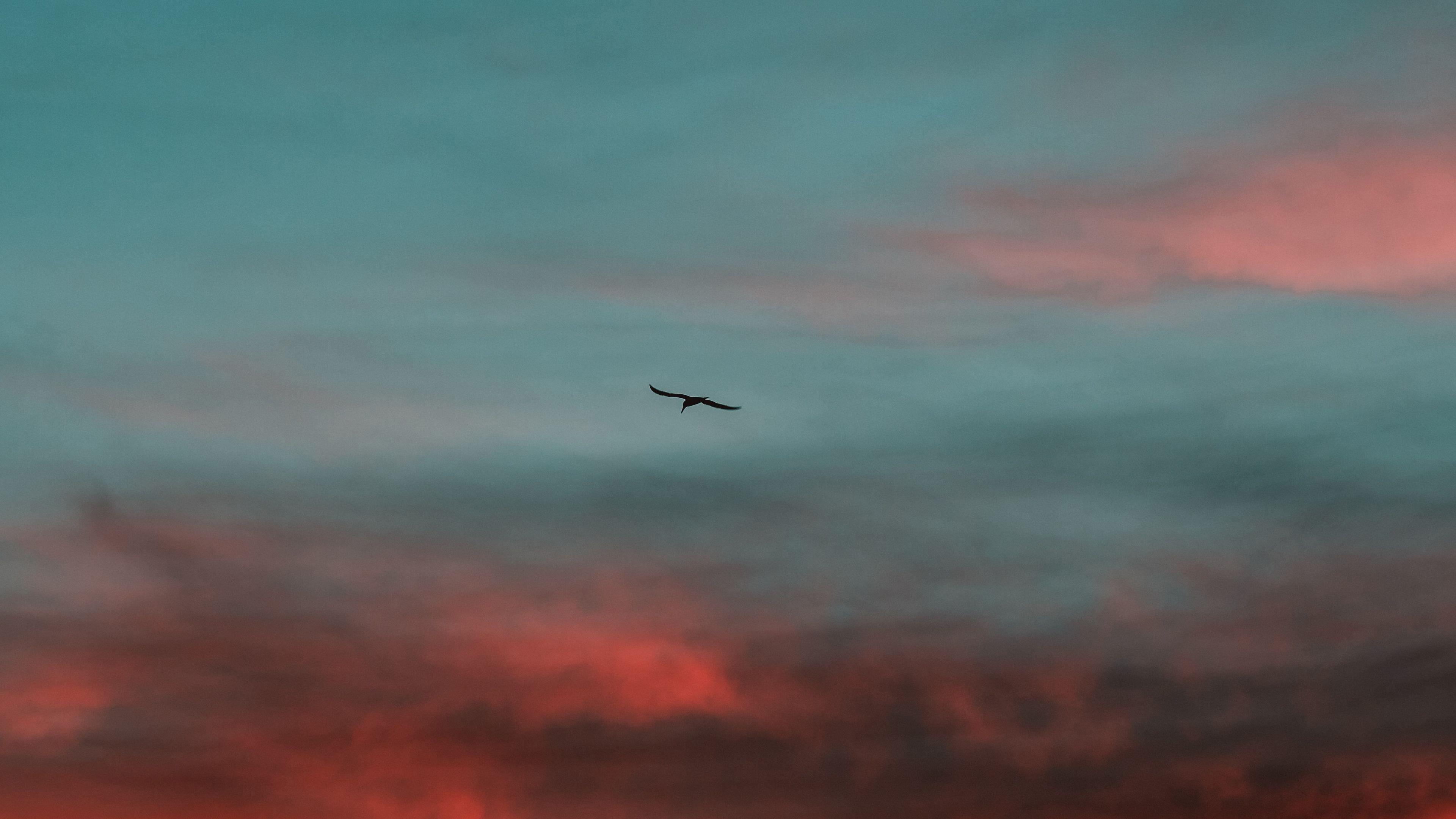 风景大片,落日余晖,晚霞,红霞,老鹰,天空,翱翔