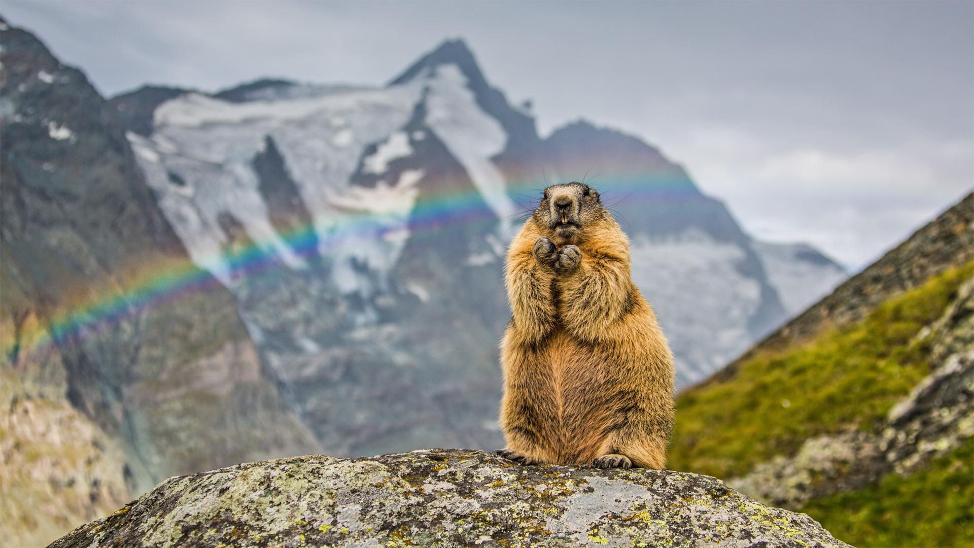 萌宠动物,野生动物,鼹鼠,彩虹,雪山