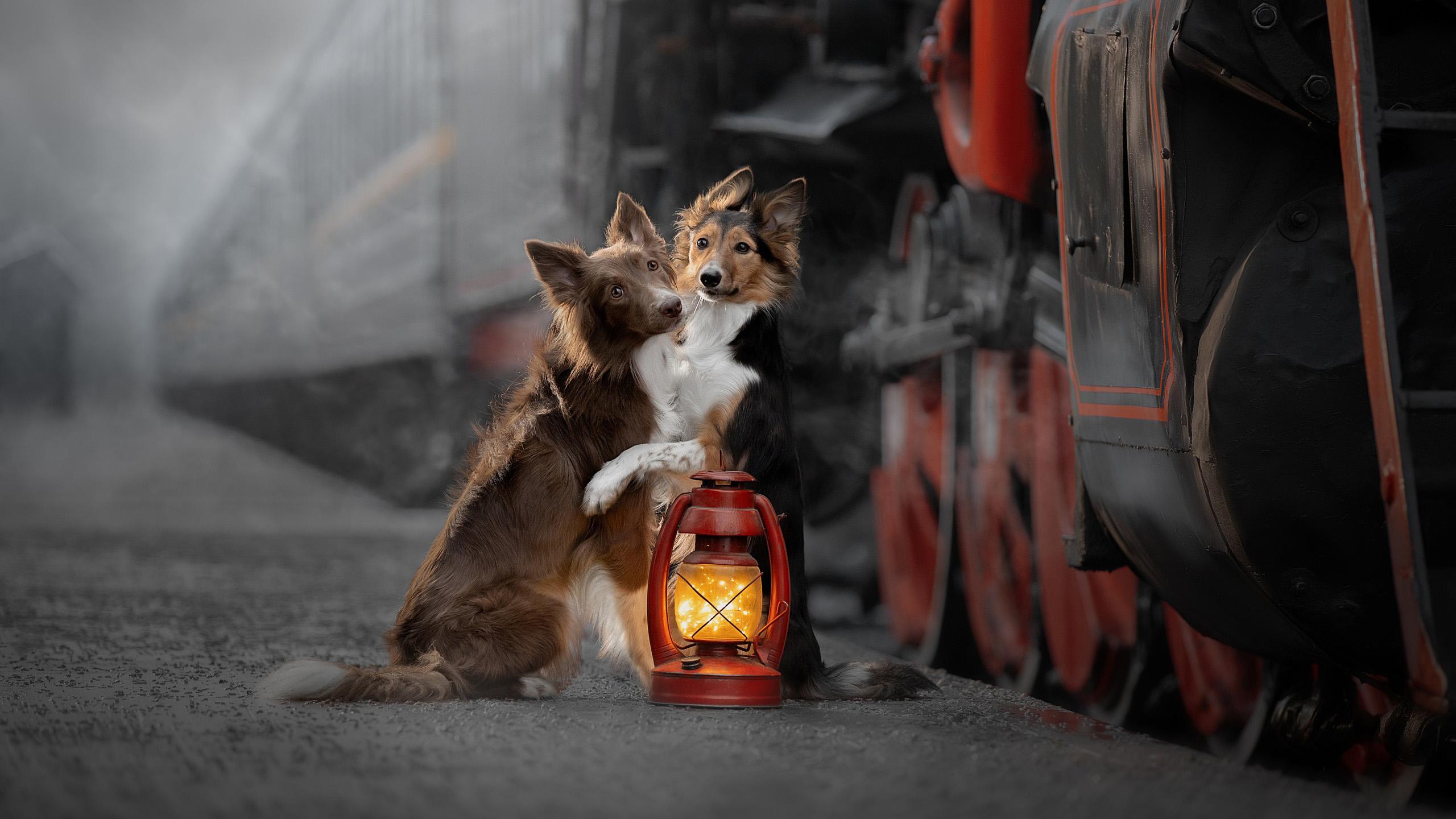 萌宠动物,汪星人,煤油灯,火车,取暖,两只狗狗