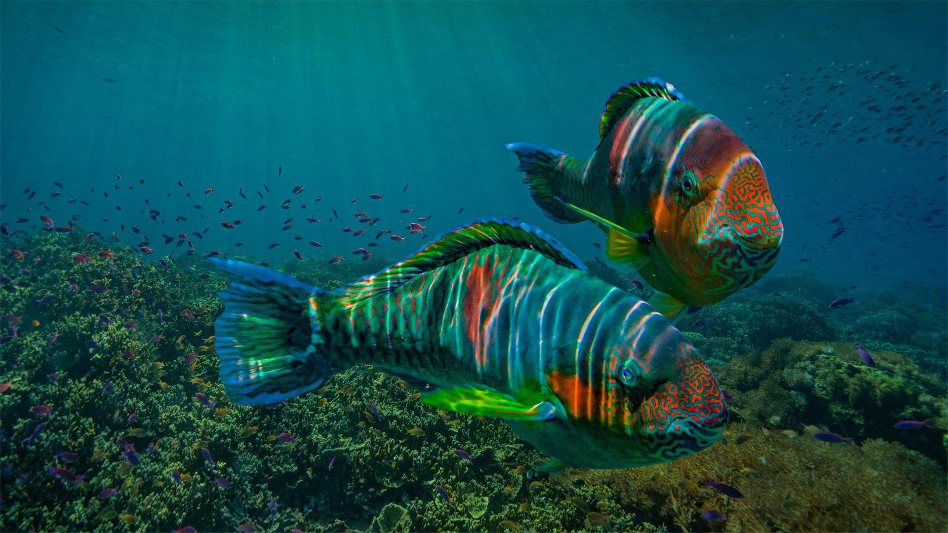 萌宠动物,海底世界,五彩鱼,大鱼,鱼群