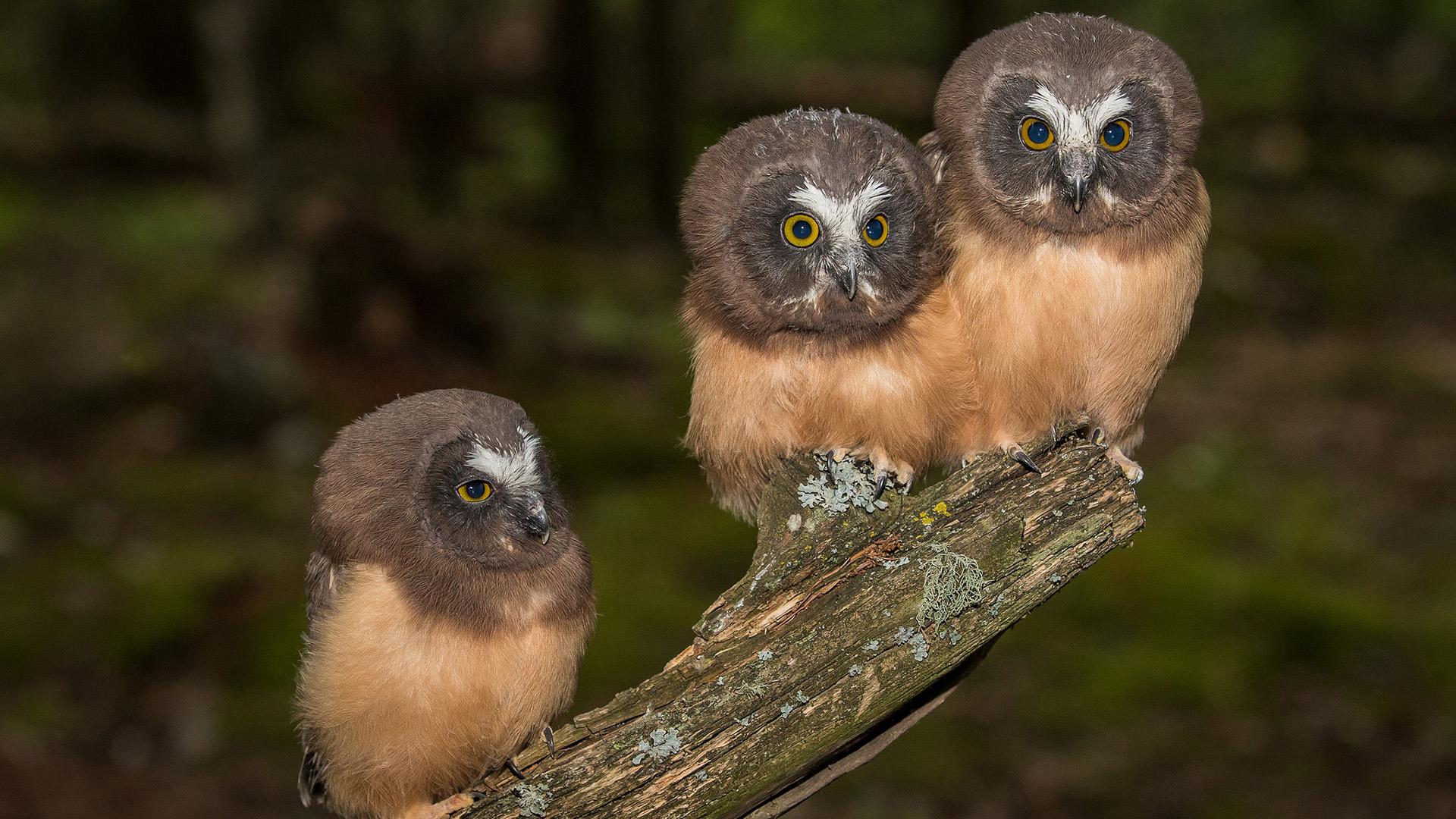 萌宠动物,小鸟天地,猫头鹰,宝宝,枯树