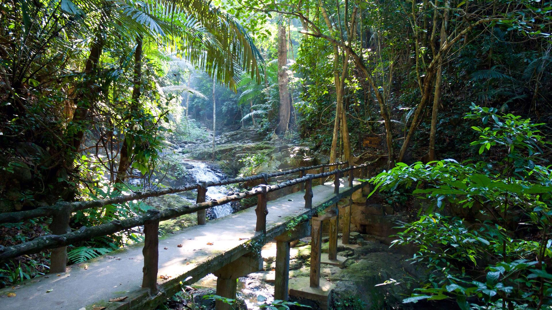 风景大片,炎炎夏日,,自然风景,,小溪,,小桥,,森林