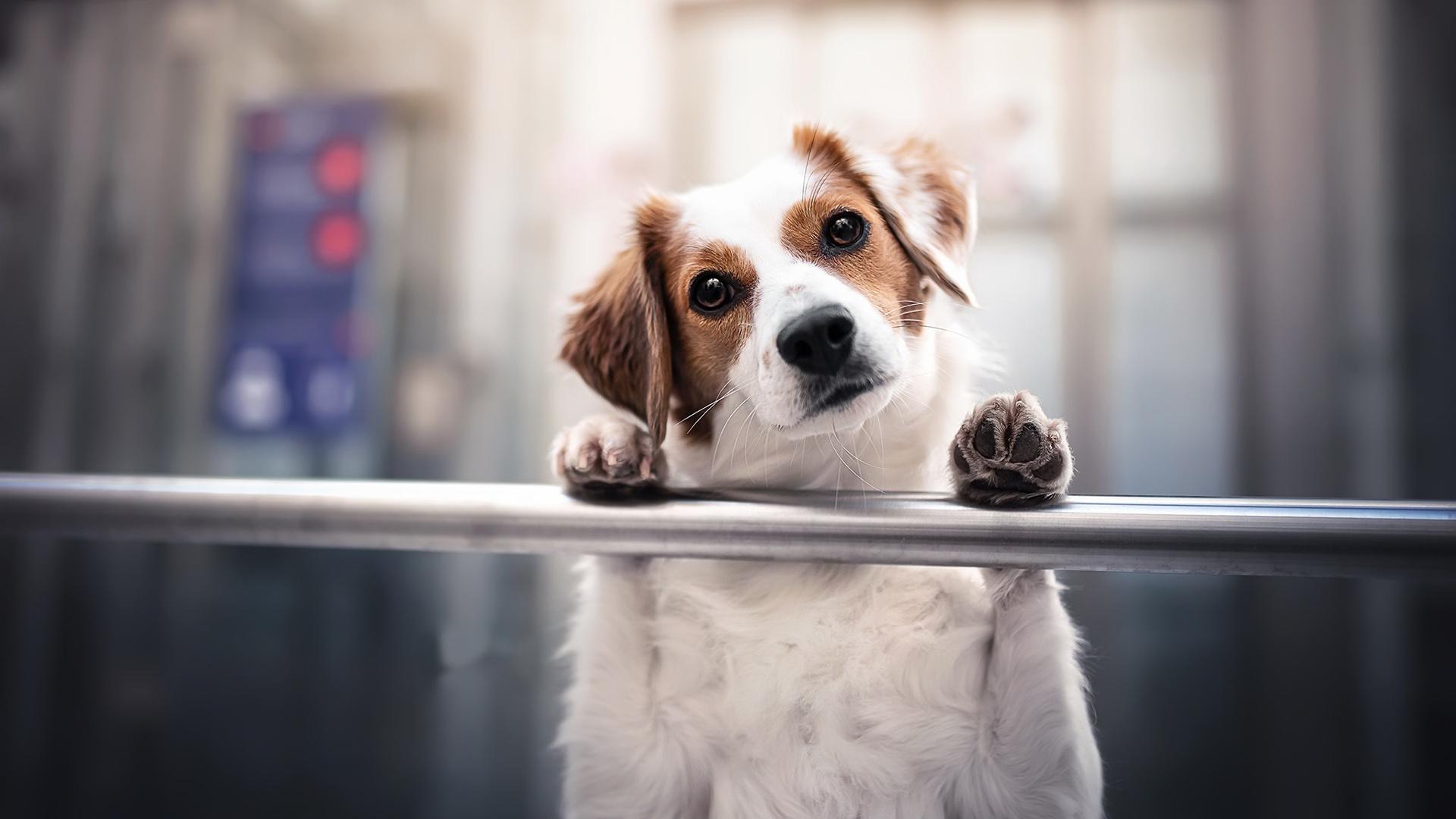 萌宠动物,汪星人,狗狗,可爱,疑问