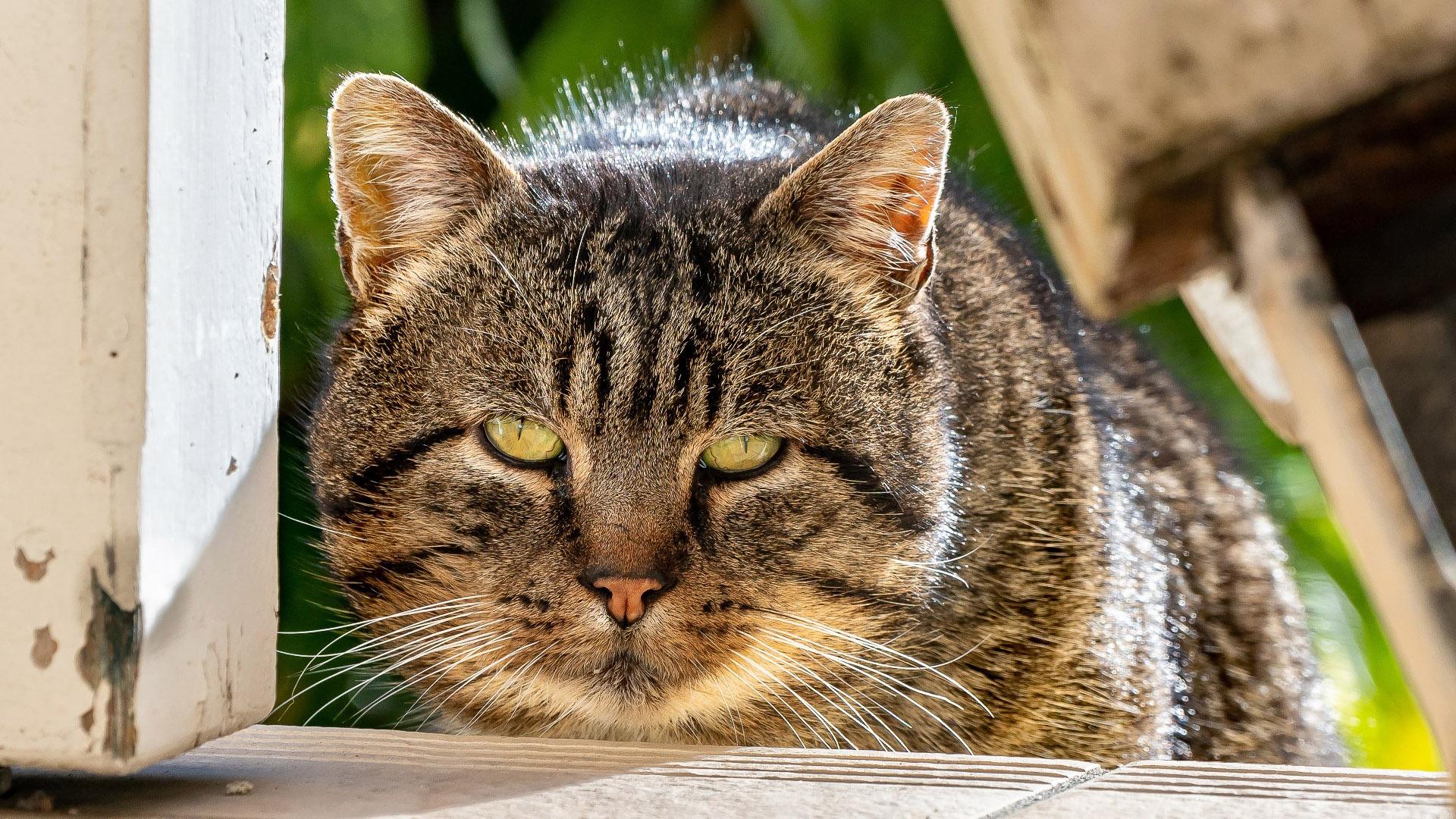 萌宠动物,喵星人,猫咪,肥猫,大脸猫