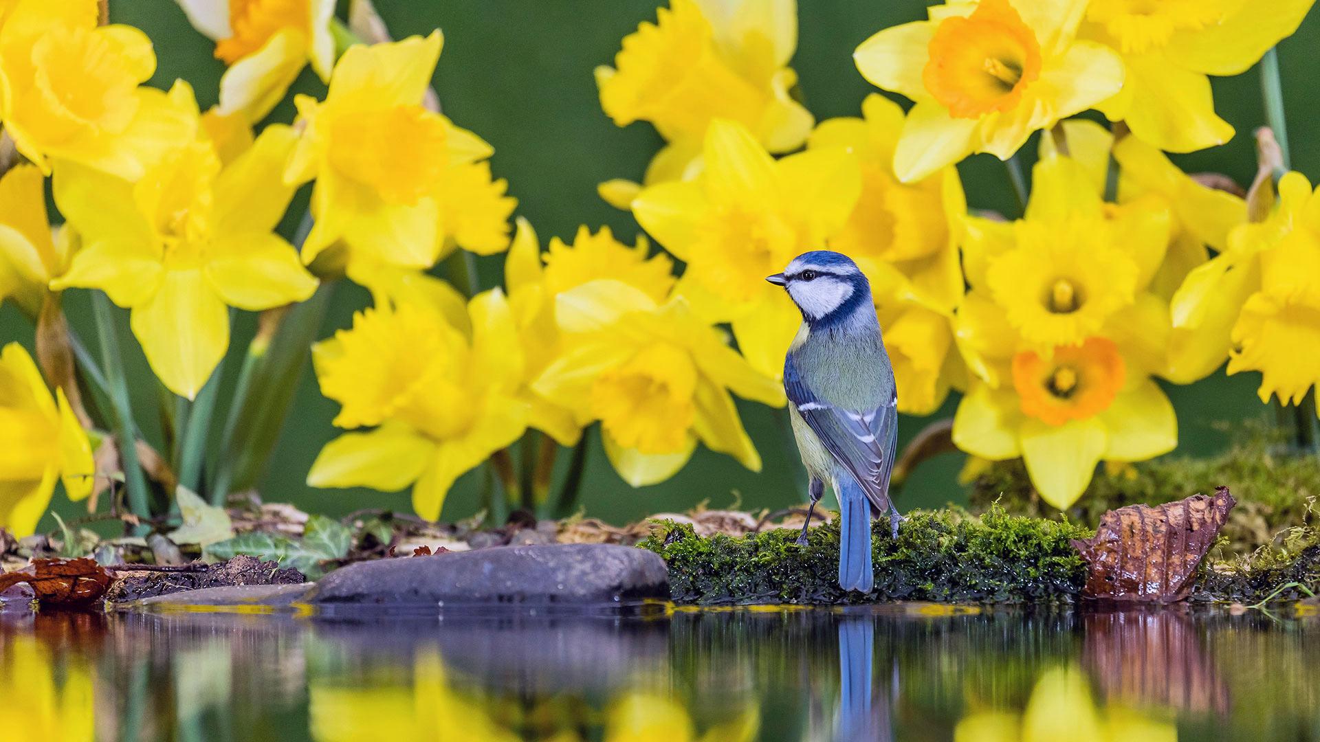 小清新,鸟语花香,小鸟,鲜花,倒影,湖水