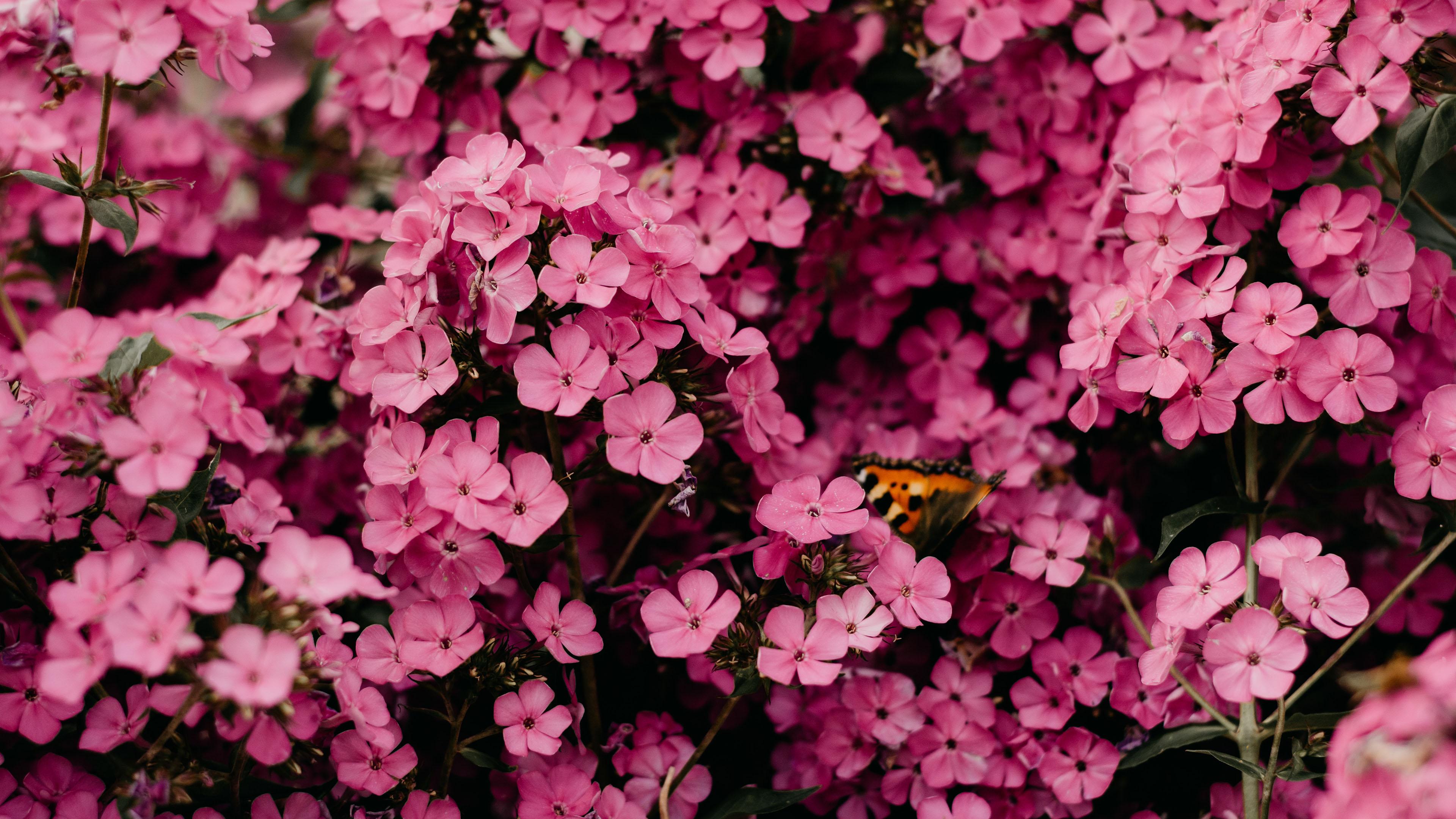小清新,娇艳欲滴,花丛,蝴蝶,蜜蜂