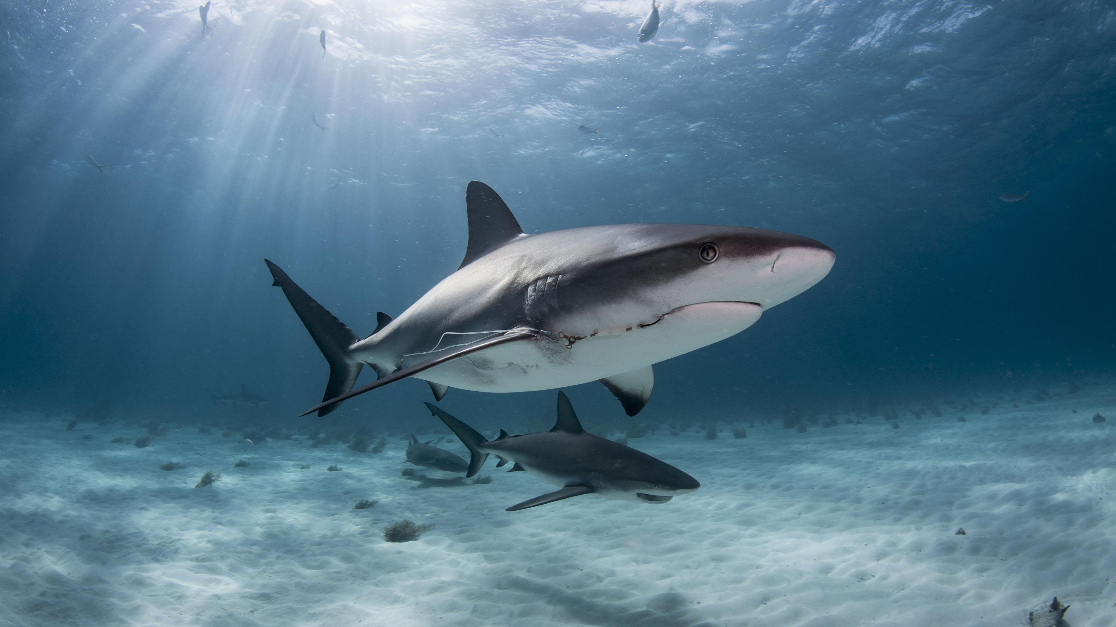 萌宠动物,海底世界,鲨鱼,深海,阳光,海洋
