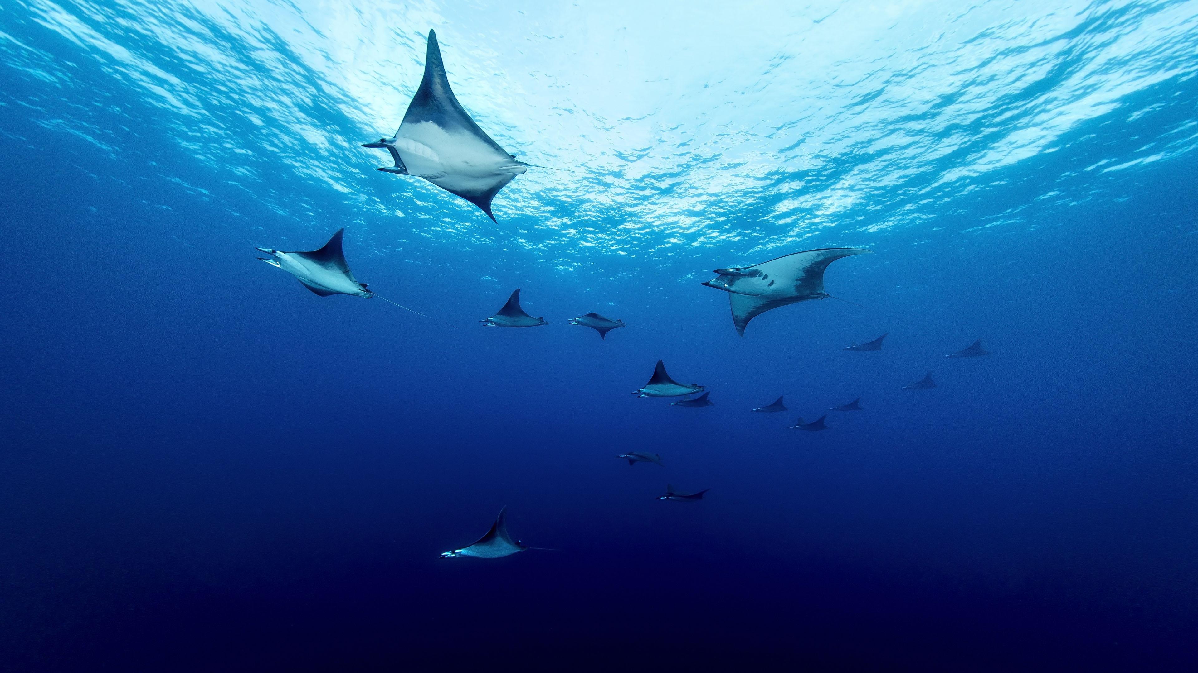 4K专区,海底世界,海洋,深海,莫布拉雷