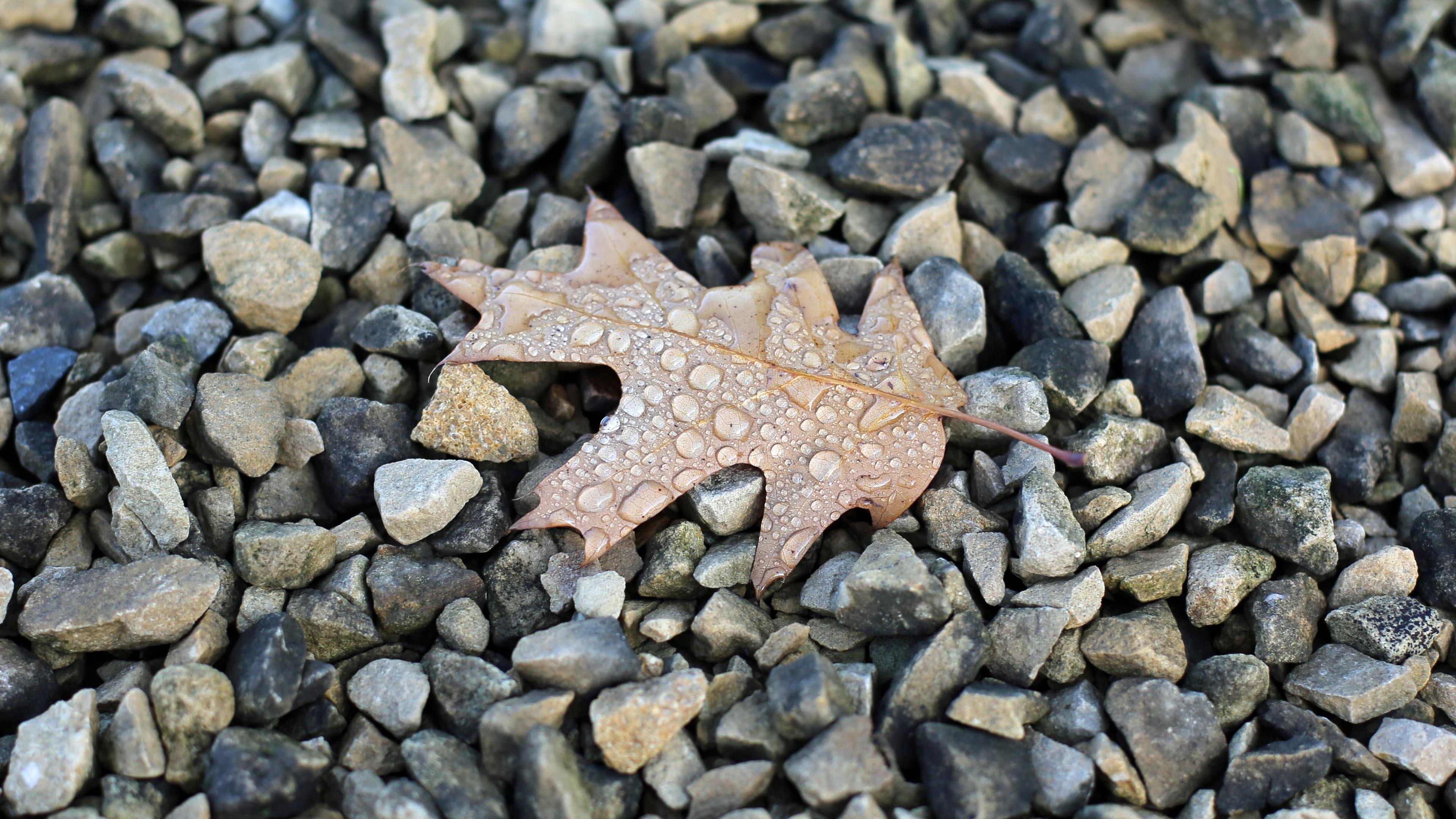 小清新,静物写真,枯叶,石子,雨水