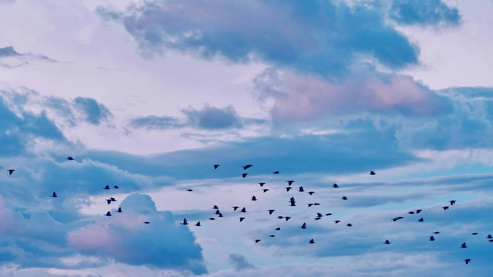 风景大片,落日余晖,鸟群,飞鸟,云彩,蓝天