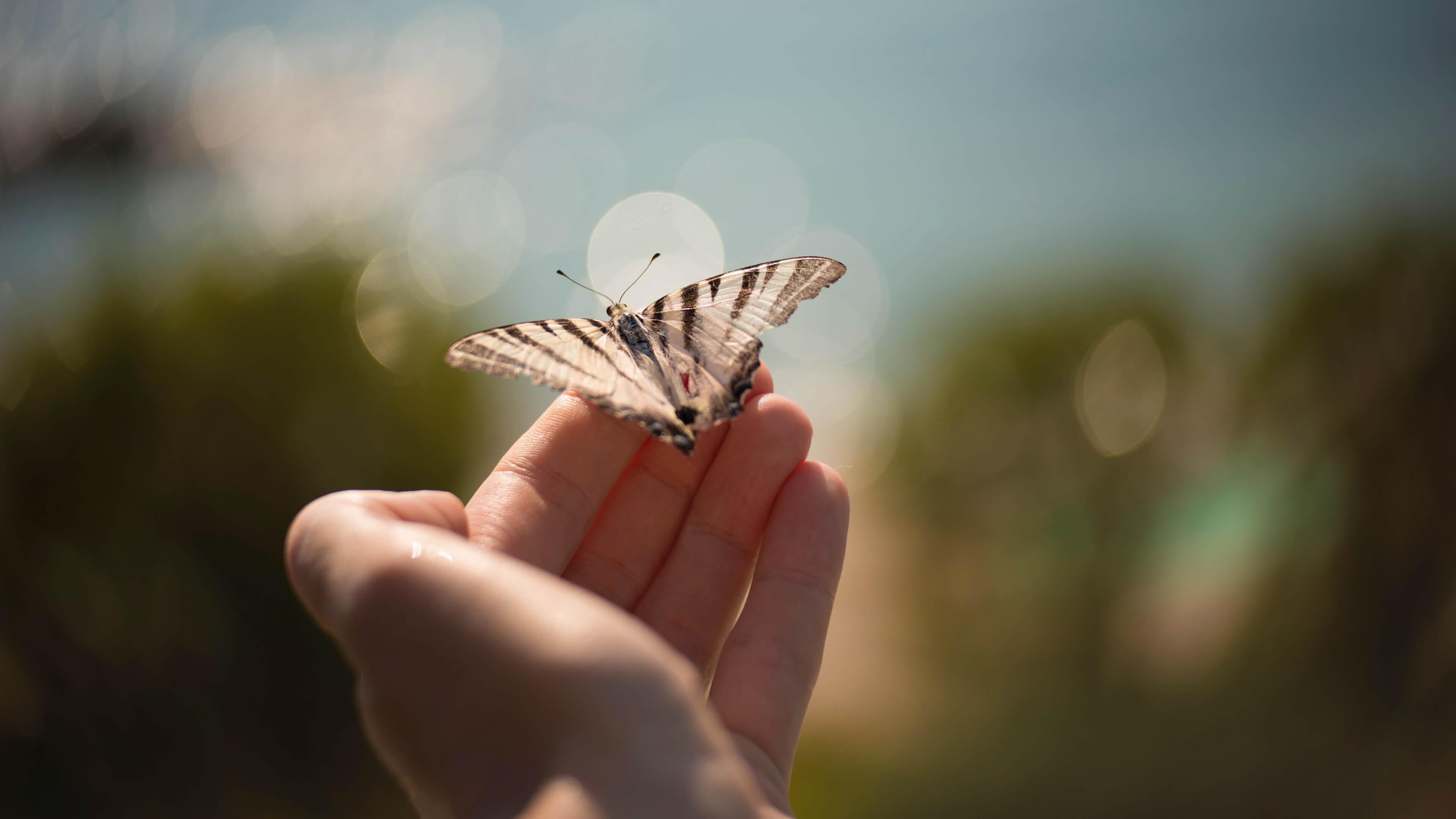 小清新,舒缓压力,蝴蝶,手,唯美