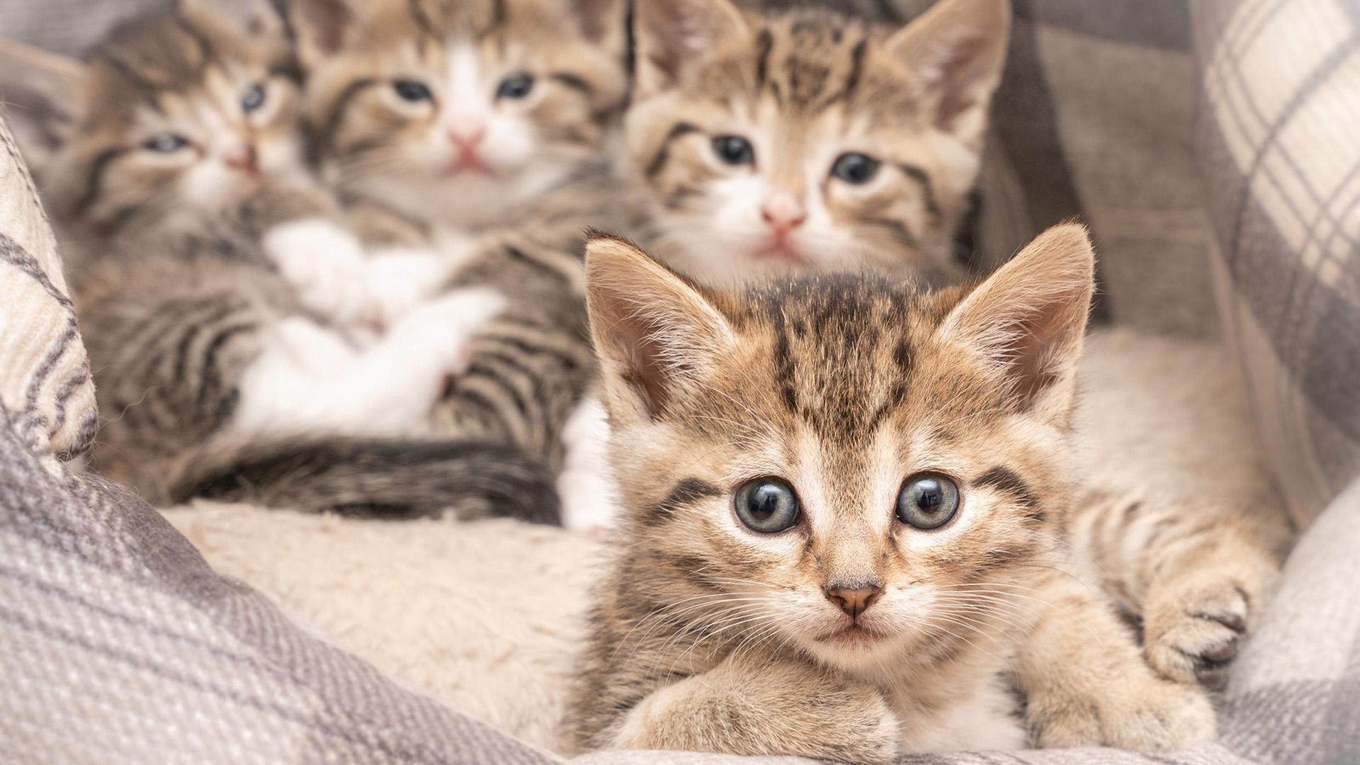 萌宠动物,喵星人,猫咪,奶猫,可爱