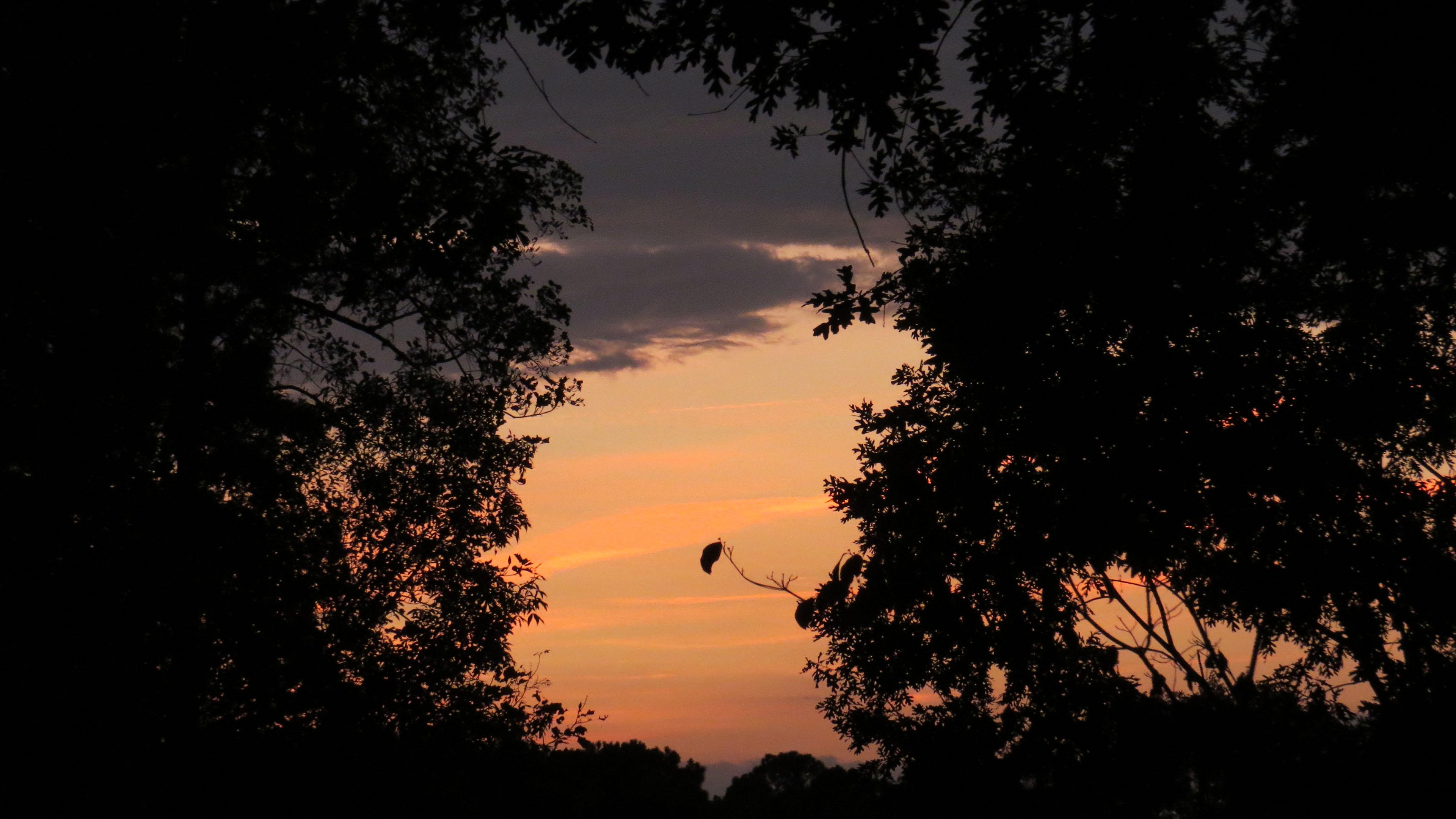 风景大片,落日余晖,晚霞,天空,树林