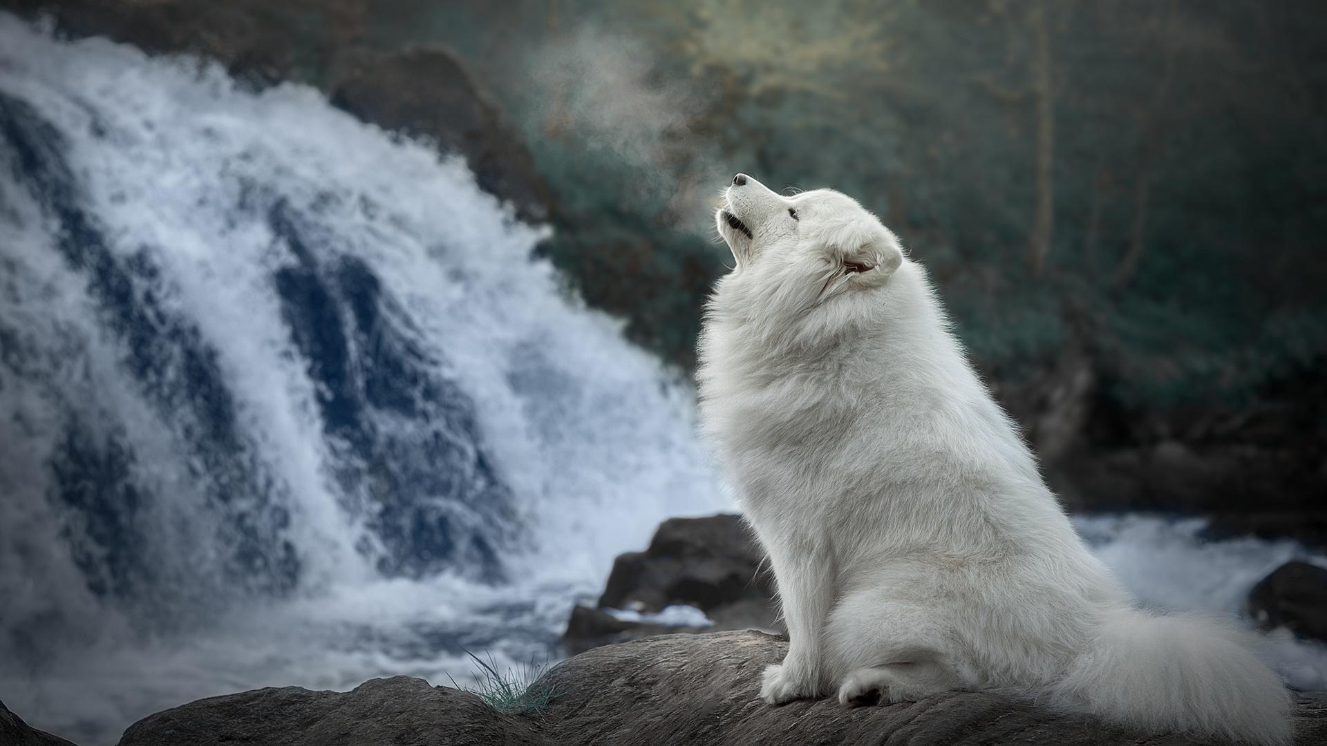 萌宠动物,汪星人,瀑布,白狗狗