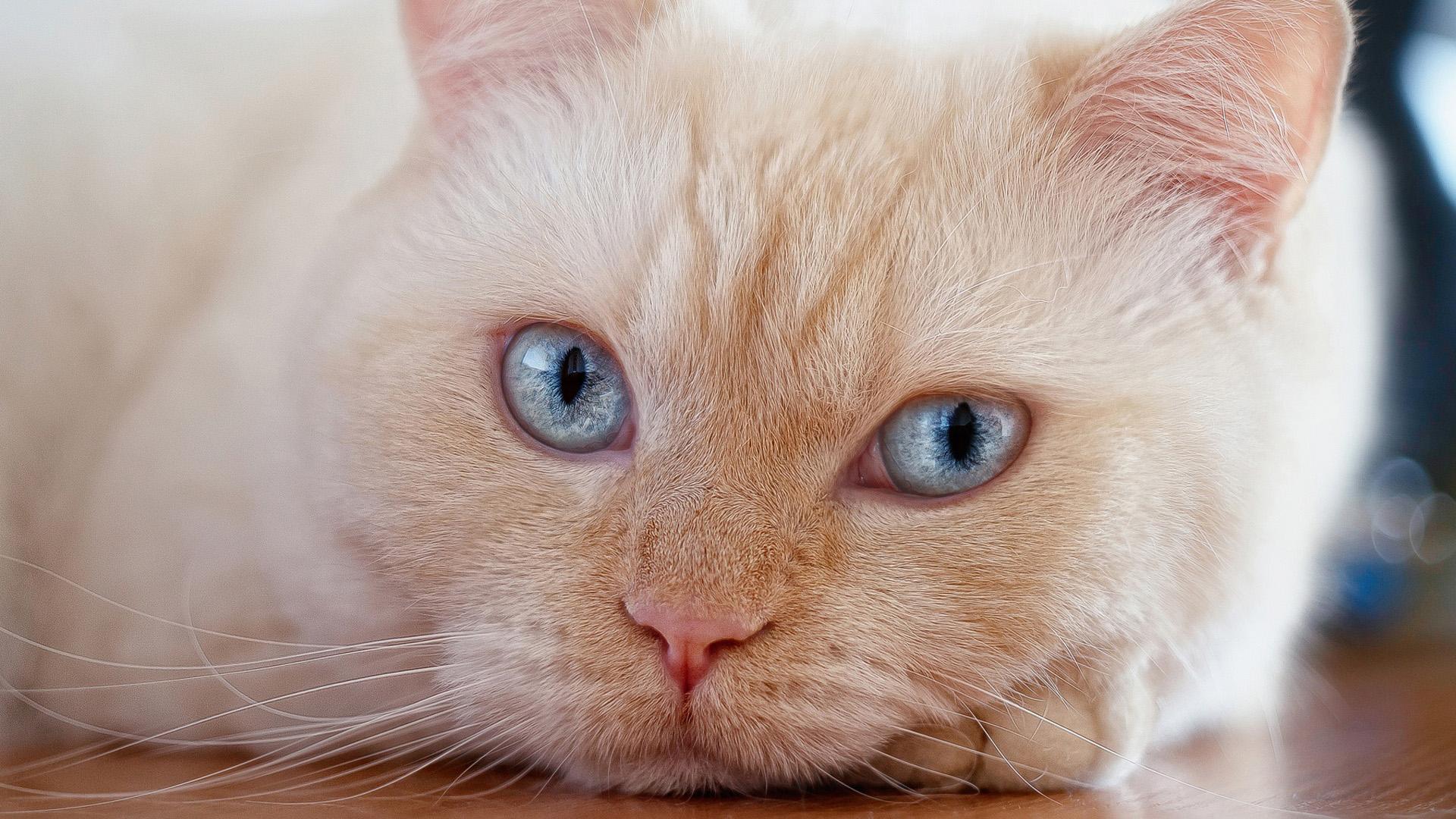 萌宠动物,喵星人,大脸猫,肥猫