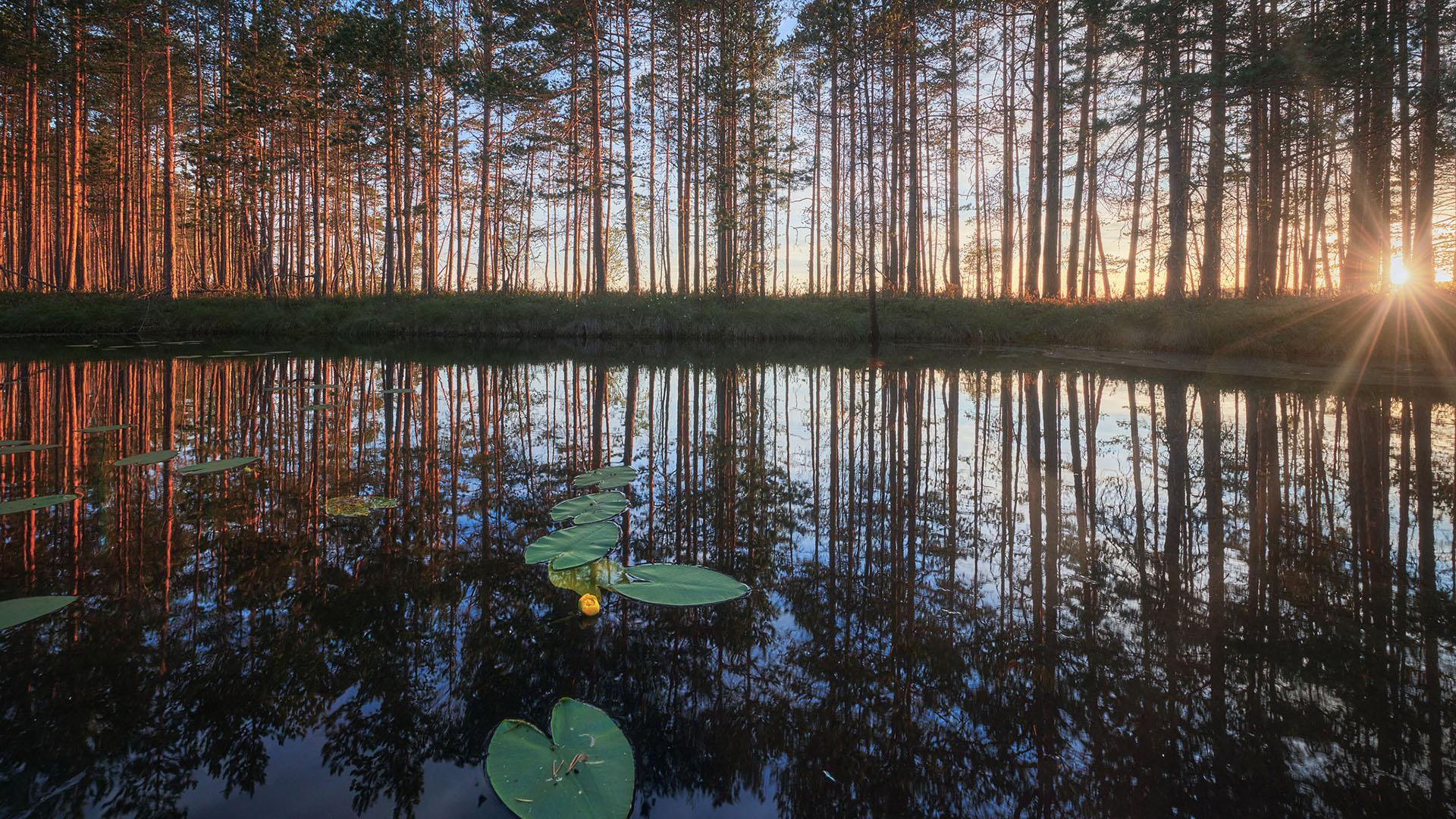 风景大片,炎炎夏日,树林,日出,倒影,荷叶,池塘