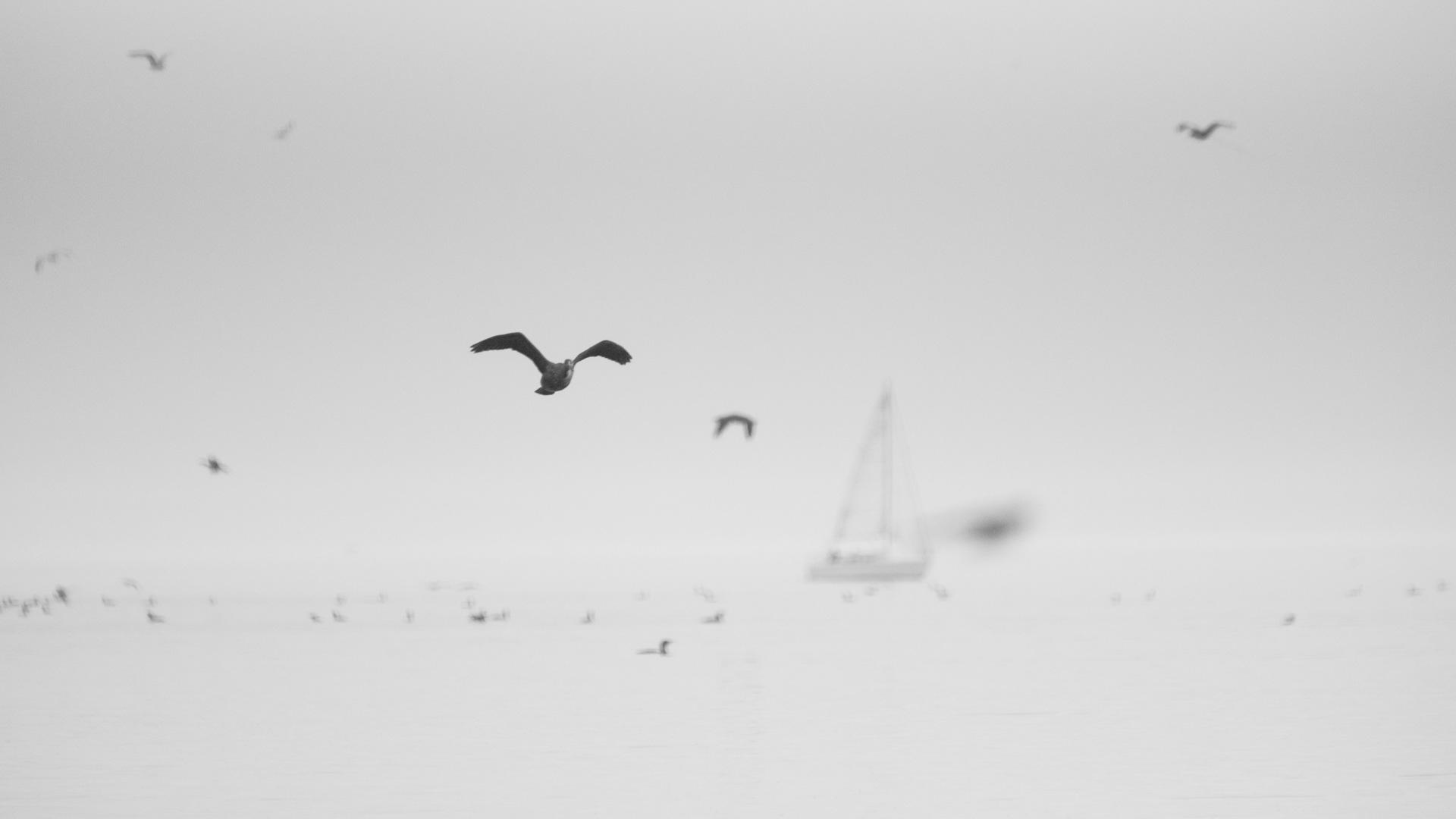 萌宠动物,小鸟天地,海鸥,国风,帆船,朦胧