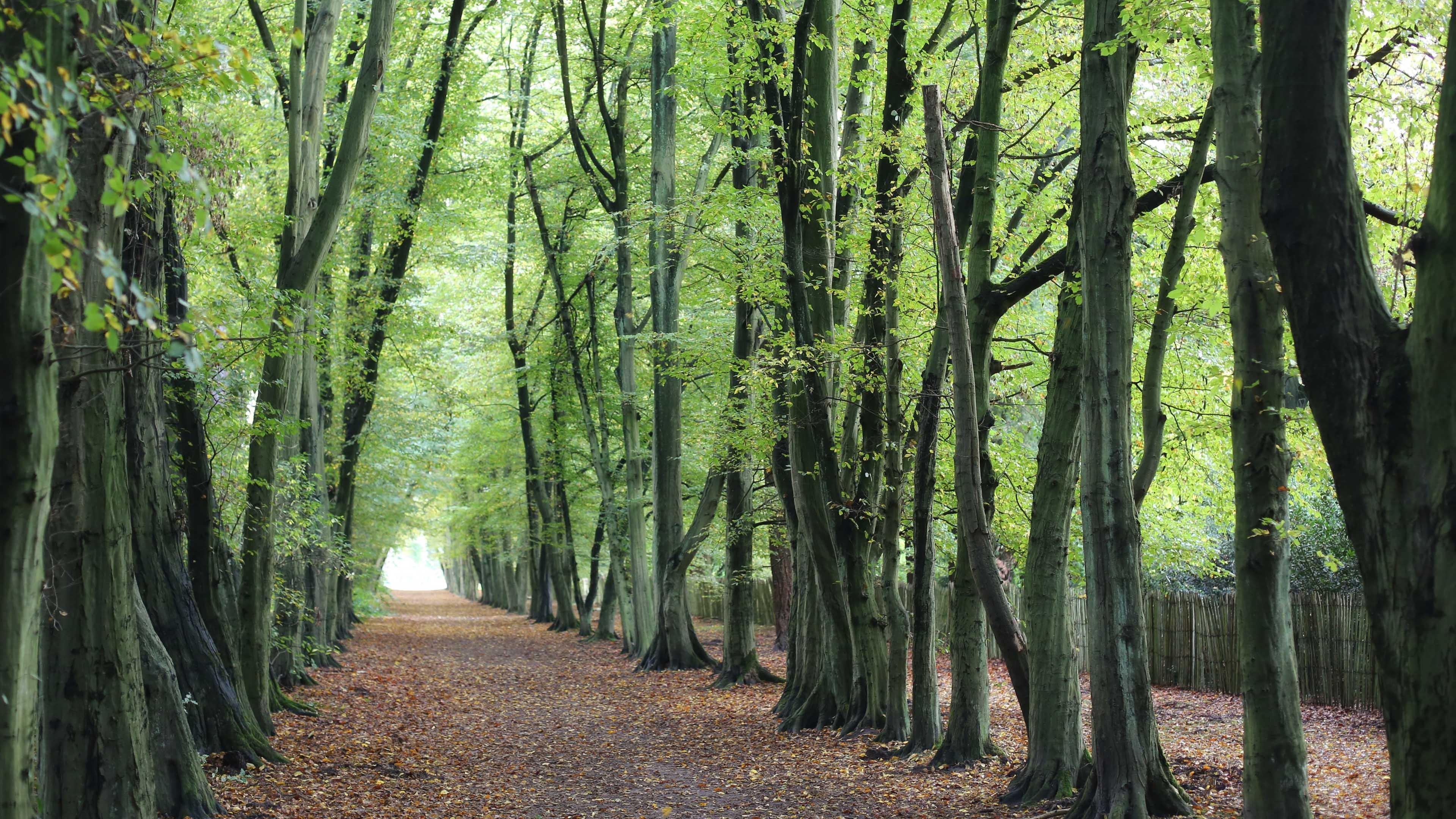 风景大片,春意盎然,树林,树荫,笔直的路