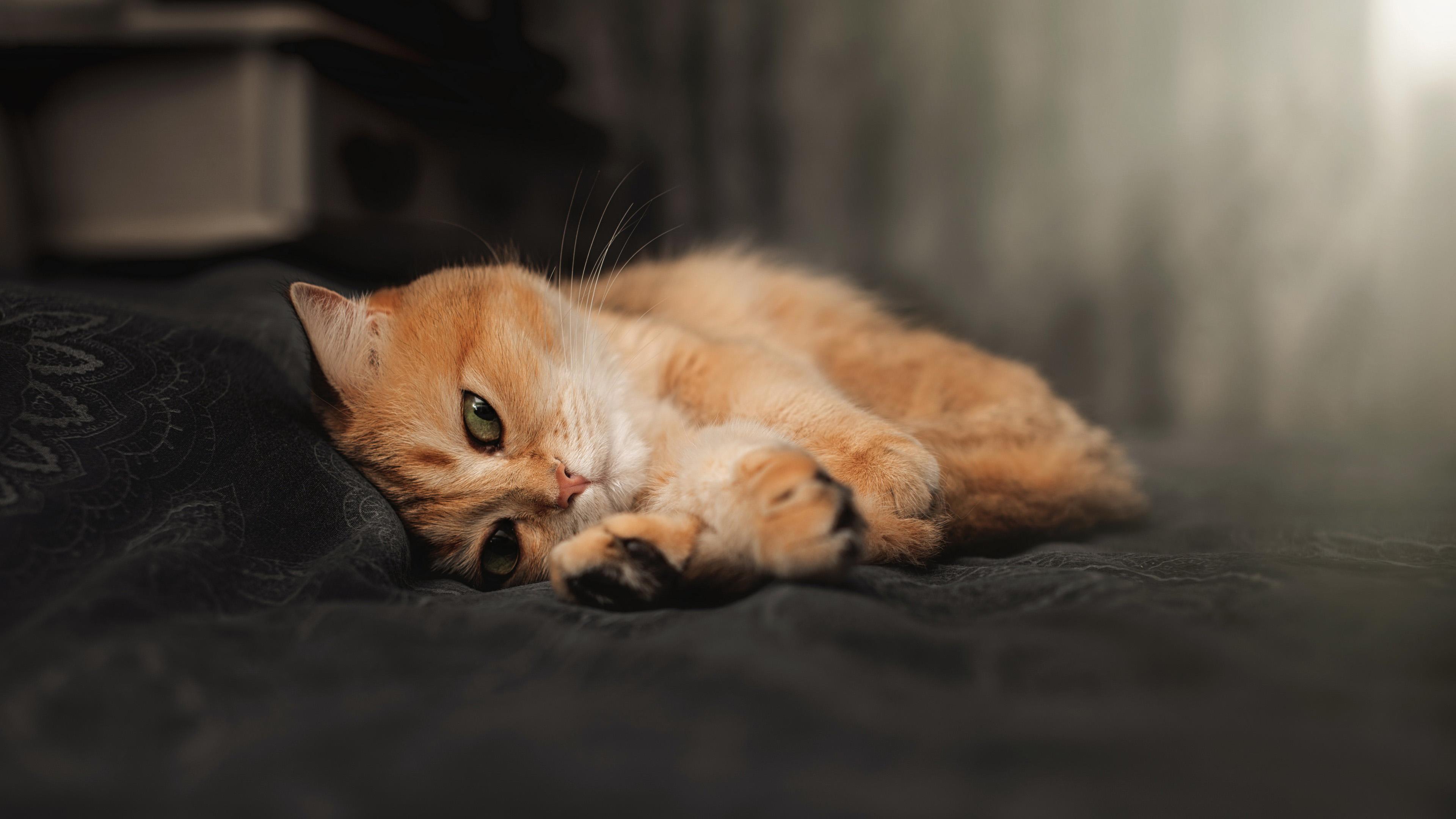 萌宠动物,喵星人,小猫咪,慵懒