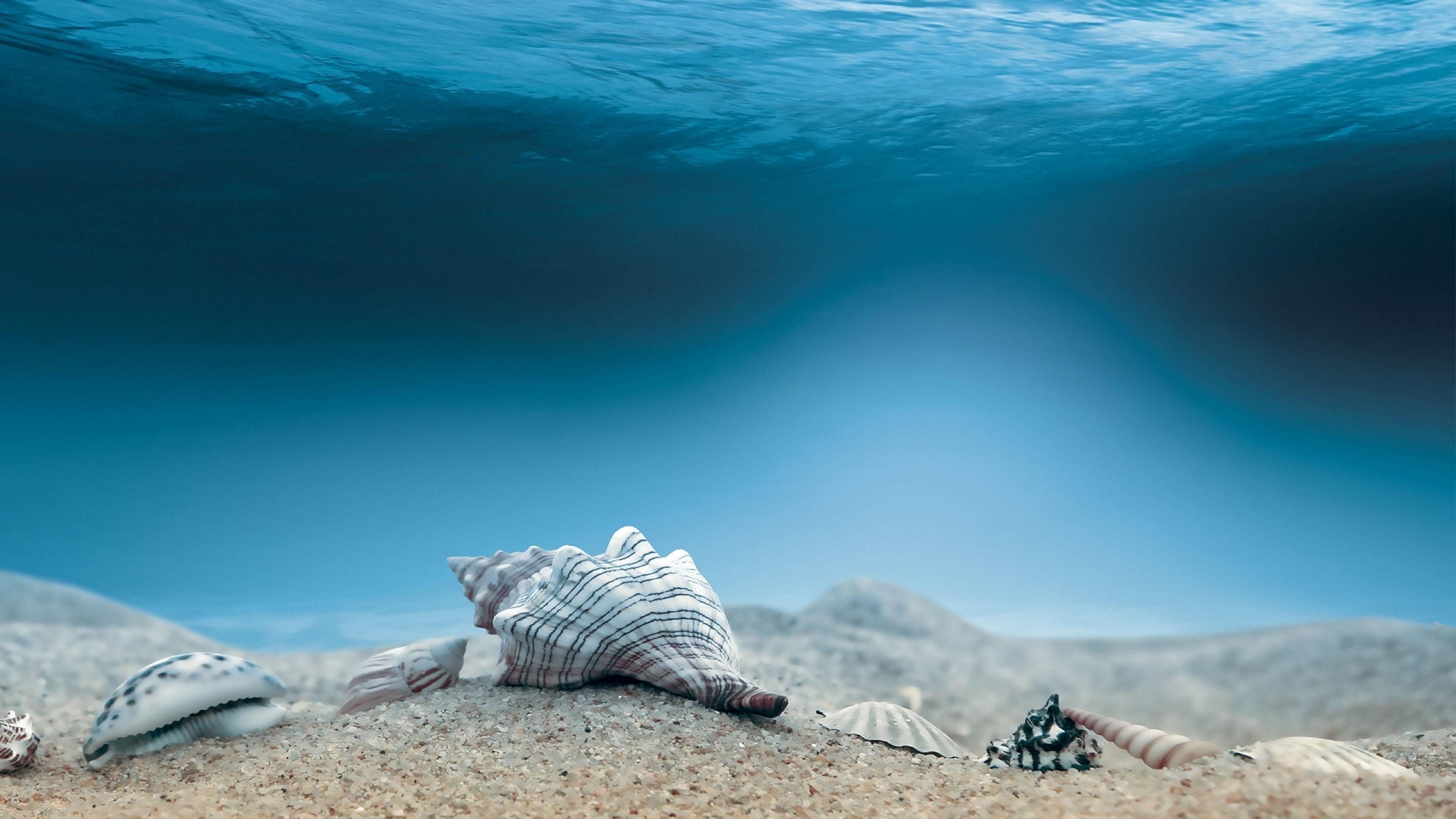 4K专区,海底,沙子,海螺,蓝色海洋