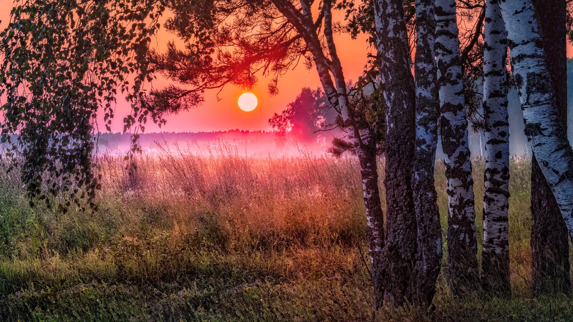 风景大片,落日余晖,树林,草原