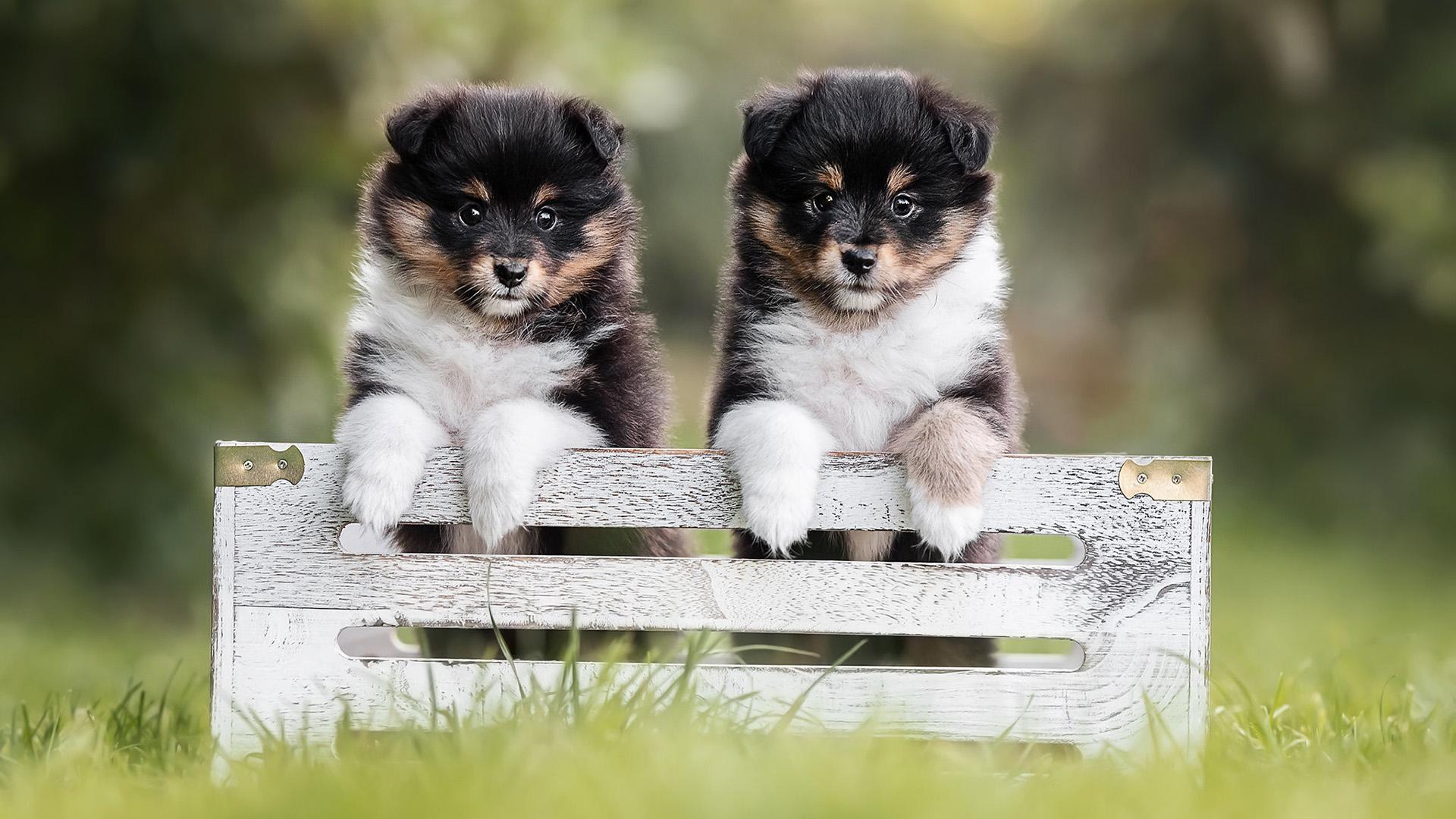 萌宠动物,汪星人,狗兄弟,可爱,草地
