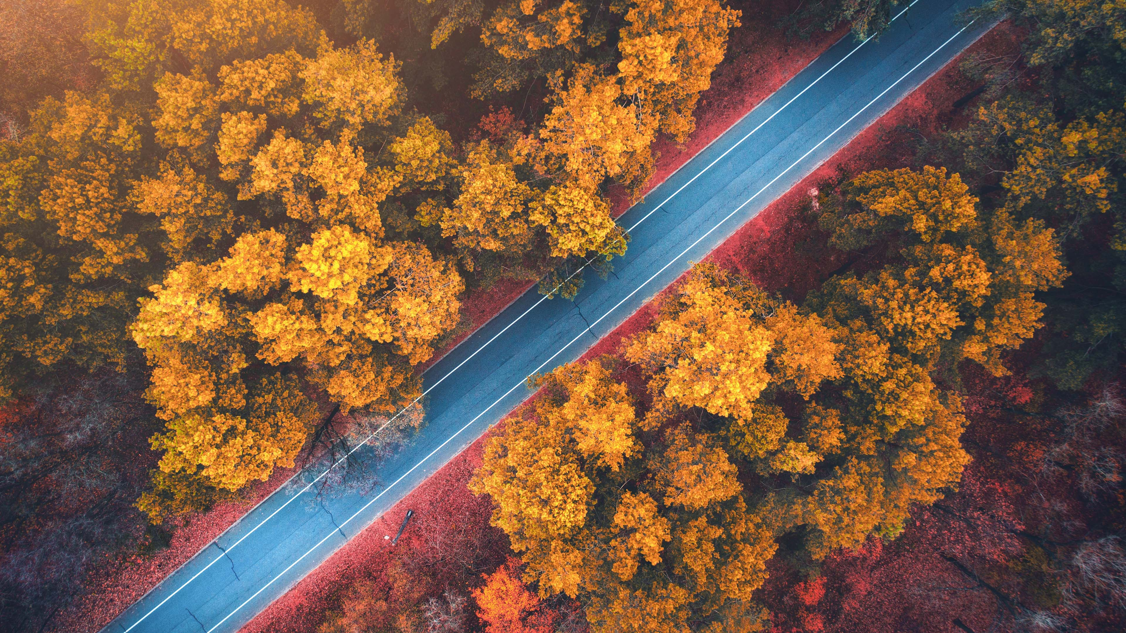风景大片,秋意正浓,秋天的公路,树林,航拍