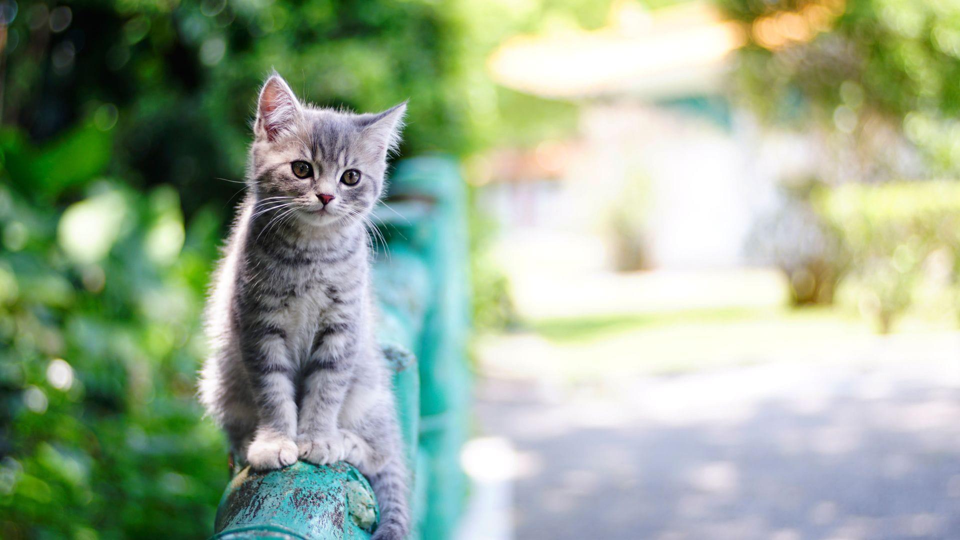 萌宠动物,喵星人,小猫咪
