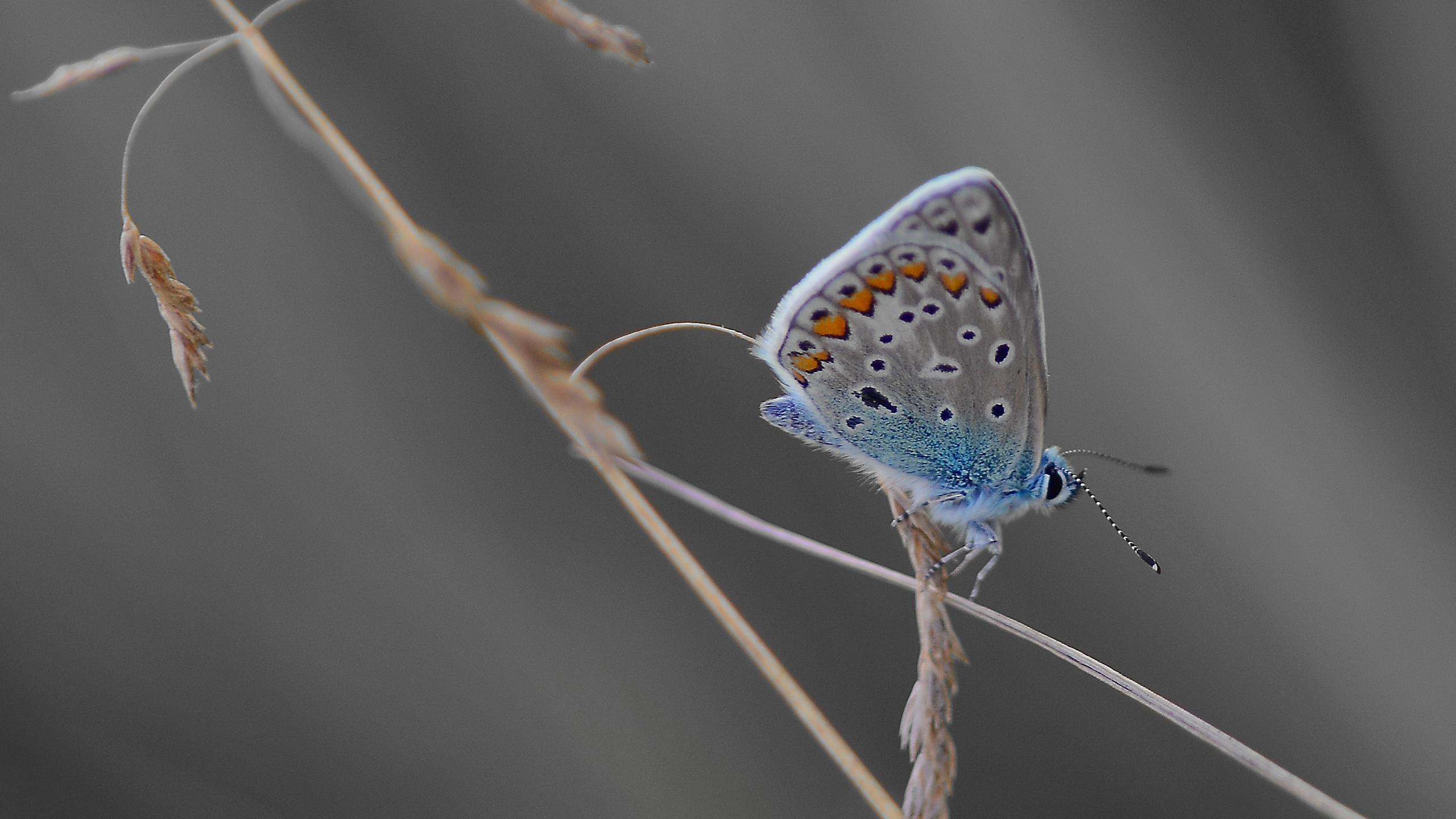 萌宠动物,野生动物,花蝴蝶