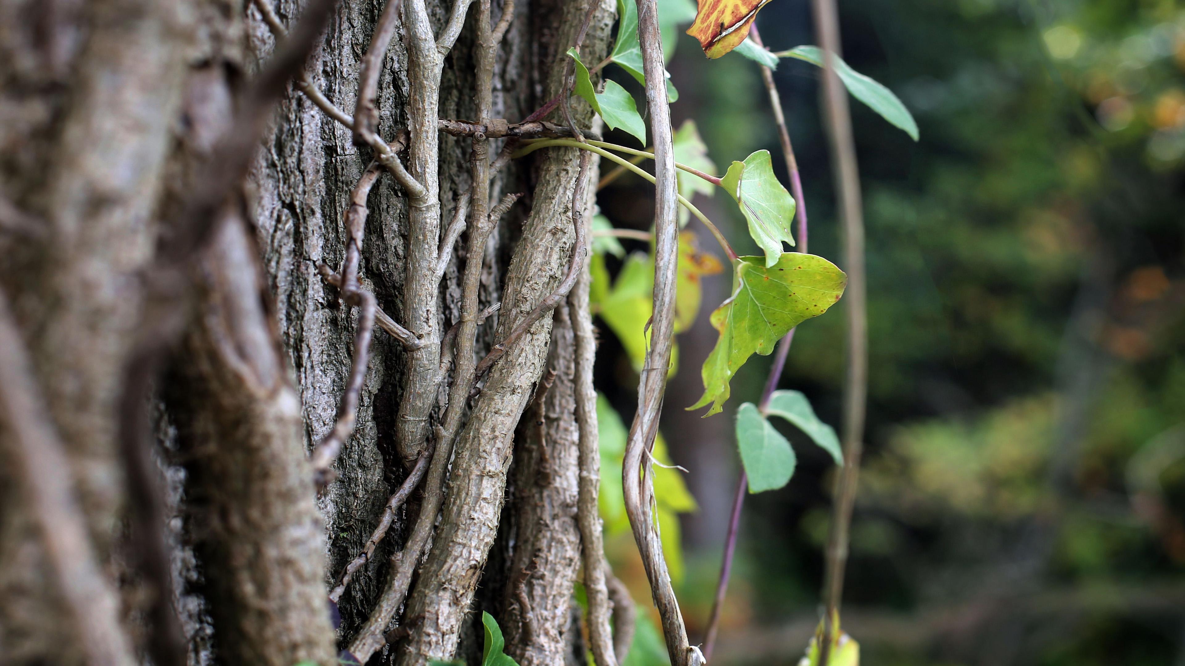 小清新,自然风光,藤蔓,森林一角